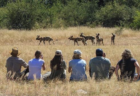 Imvelo Safari Lodges - Wild dog near Bom