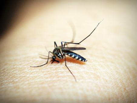La moustiquaire, une solution efficace et innofensive contre les moustiques !