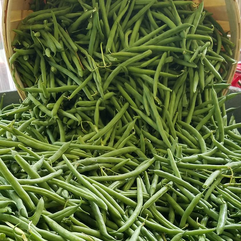 Preserving Green Beans using a Pressure Canner