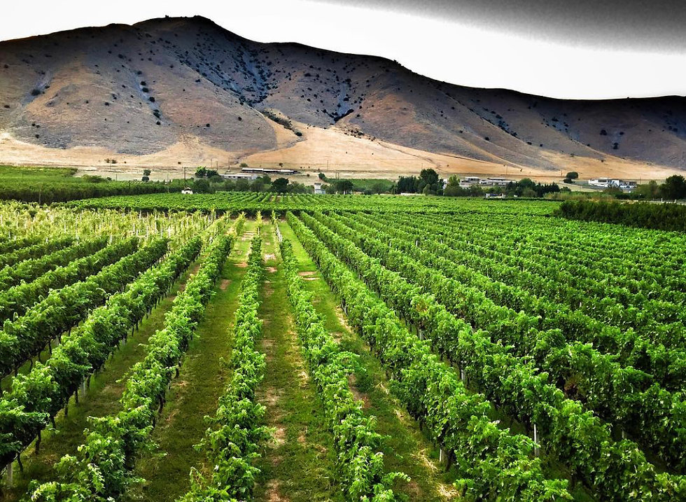 Domaine Zafeirakis Vineyards