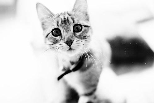 Bon cadeau Love Pets
