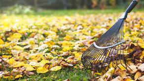 Fall Lawn Maintenance Tips