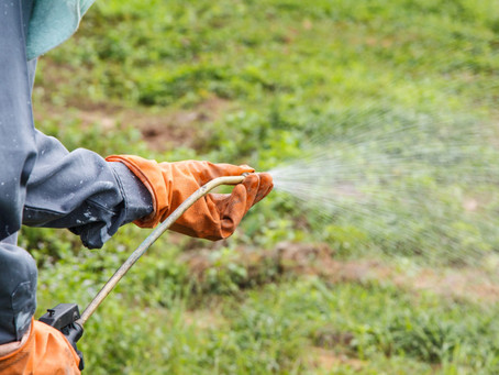 Fall Lawn Care: How to Use a Pre-Emergent Herbicide