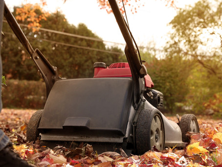 Pro Tips for Fall Lawn Care
