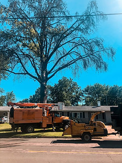 Tree Removal 3