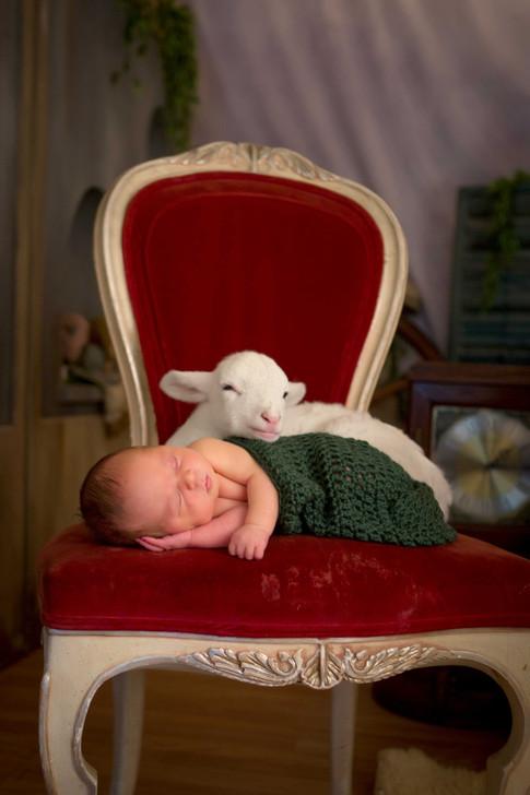 Lamb and newborn