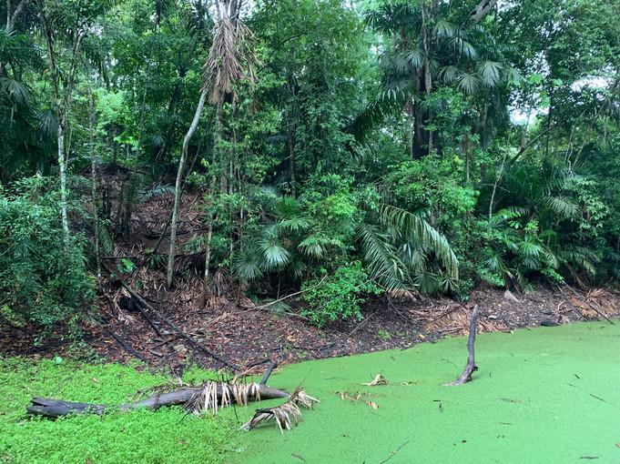 Ocelot Pond 2019