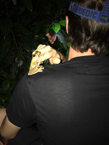 Friendly Frog 2018