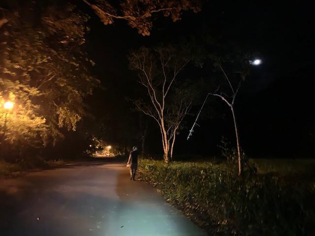 Field Work in the Moonlight 2019