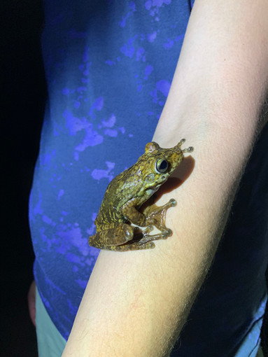 Gladiator Frog 2019