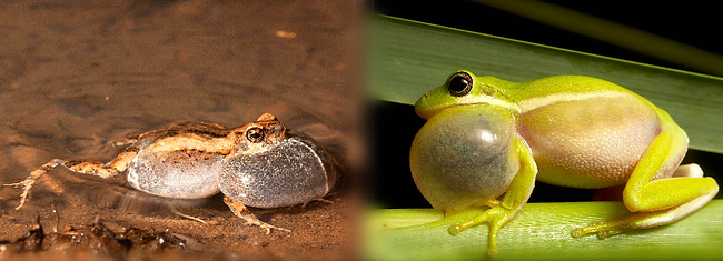 frog composite small.png