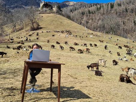 DAD d'alta quota. In Val di Sole c'è chi la fa tra le capre (e non si lamenta)