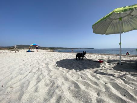 Cani cari, benvenuti in spiaggia. Ecco le regole per far godere il mare a Fido