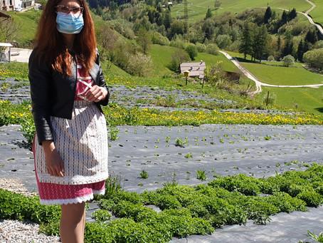 Le erbe curative di montagna? Crescono meglio a ritmo di Mozart