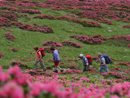 """Le aziende agricole montane? Ecco il """"pranzo al sacco solidale"""" per aiutarle"""