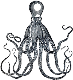 Vintage-Octopus-Image-GraphicsFairy.png