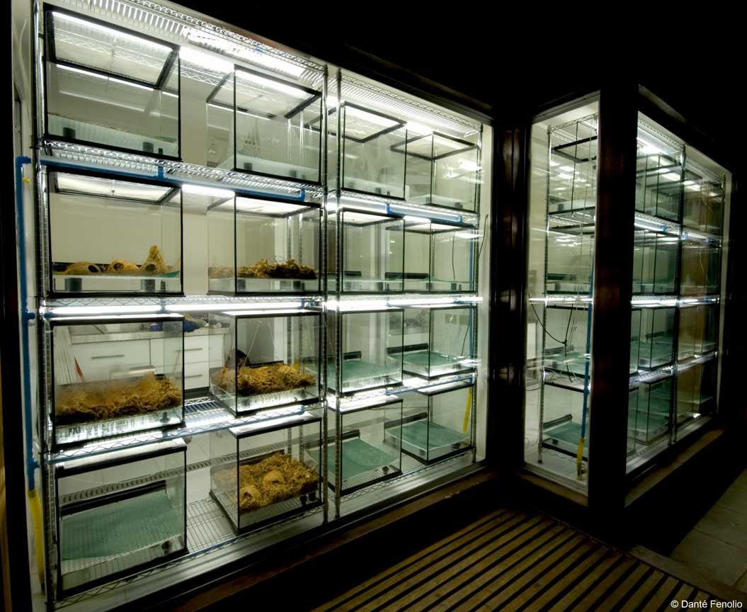 Centro de crías de rana de Darwin