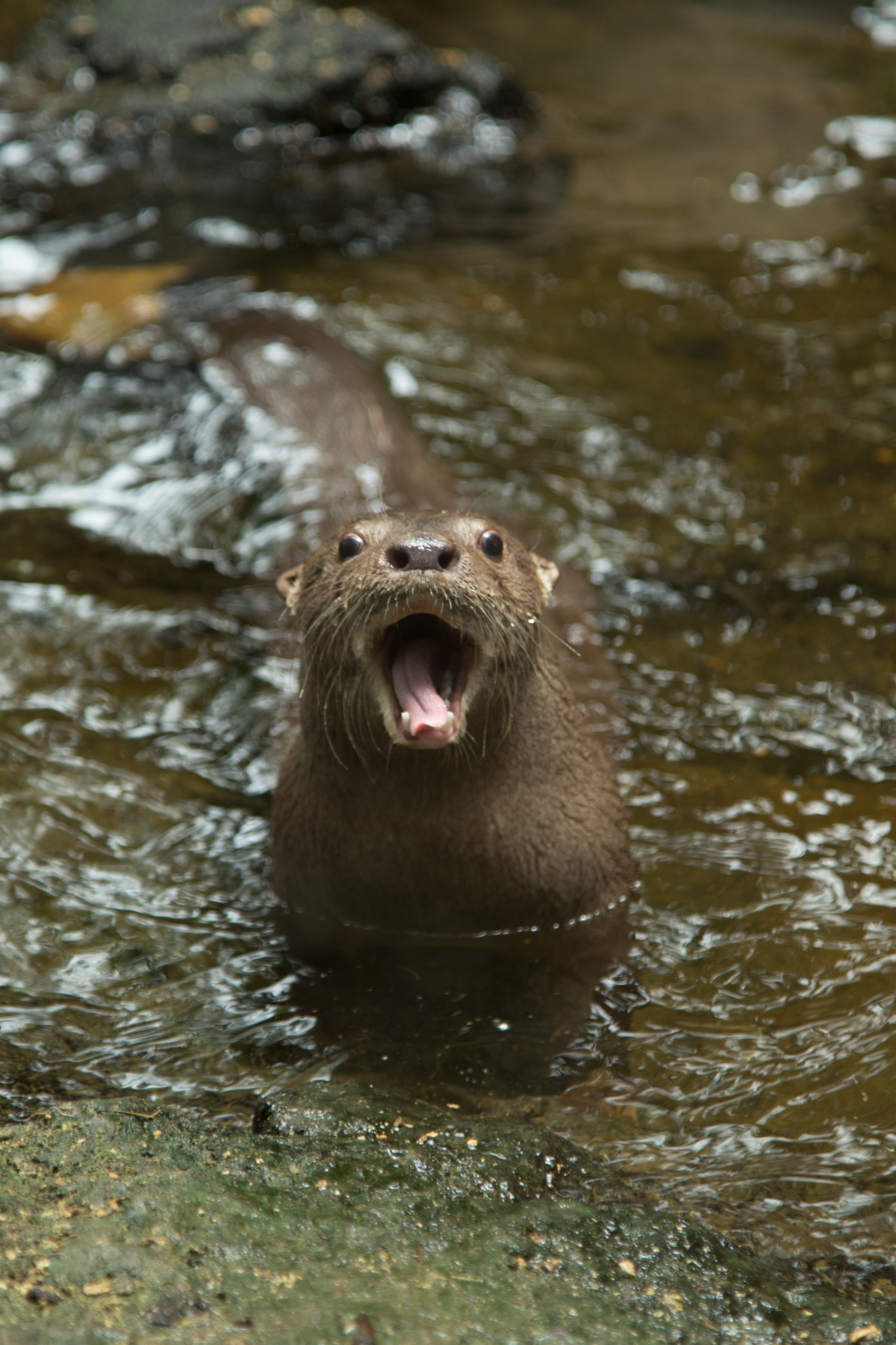 Fauna en el humedal