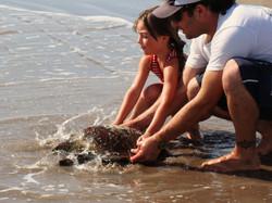 Reintroducción de tortugas marinas