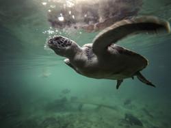 Proyecto tortugas marinas - XCARET