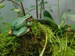 Anfibios en conservación