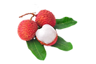 13855060-fresh-lychees-with-leaves-isola