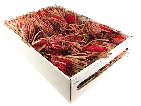 Banksia hookerana,crvena, 30 kom
