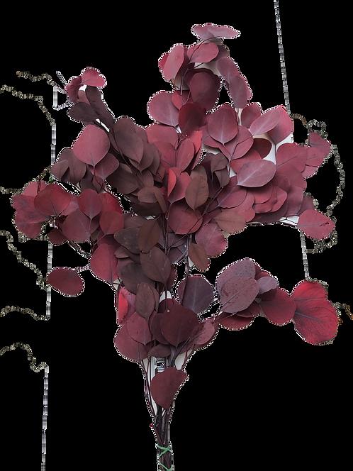 Eukaliptus popolos crveni