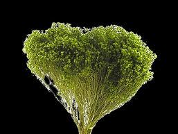 broom zelena 1.jpg
