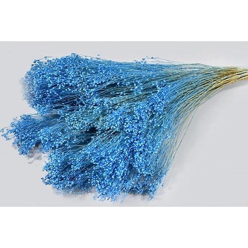 Broom bloom plavi