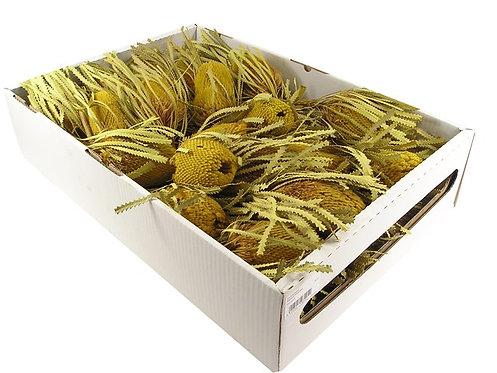 Banksia Hookerana, žuta, 30 kom