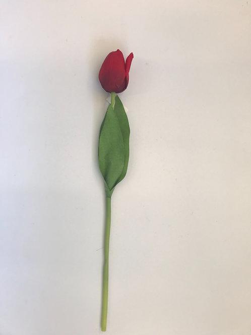 Tulipan crveni