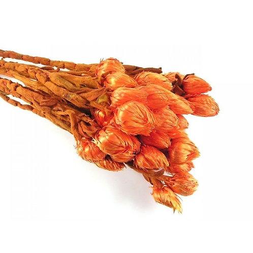 Suhe ruže- narančaste