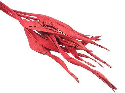 List sterlizije-crveni-10 kom
