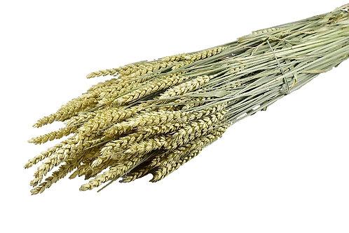 Pšenica, natur