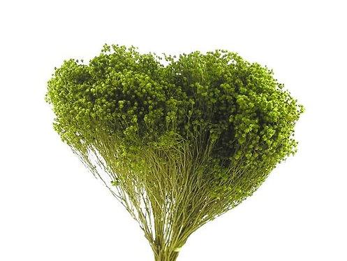 Broom zeleni 100 g