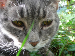 Blog Mascot Tsuki Cat