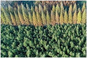 forestry_uav.png
