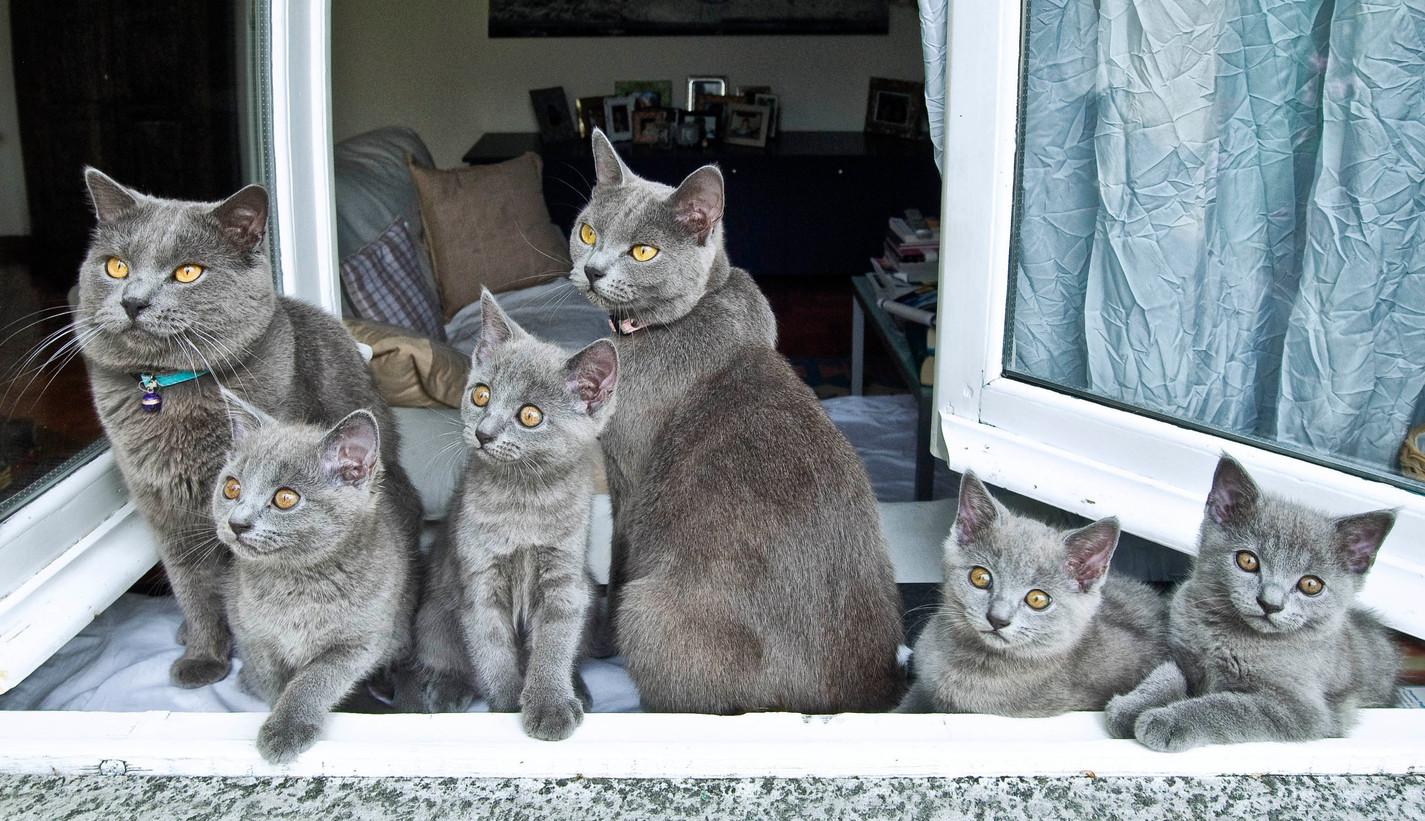 Tommy e Lola family