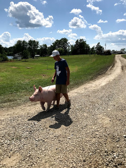 walking hog