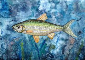 Fisk 2017