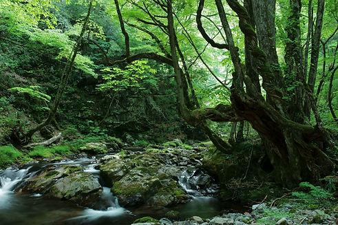 岡山の自然