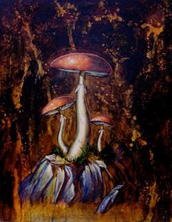 Chroniques de champignons