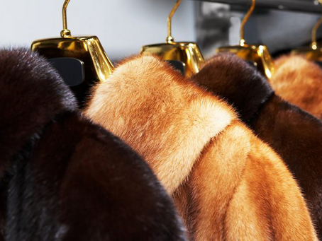 Germany Votes to End All Fur Farming
