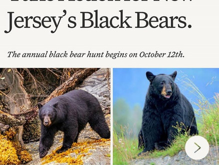 Take Action for New Jeresy Black Bears - End Hunt