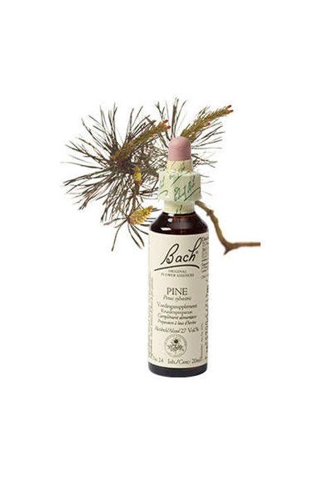 Pine / Pijnboom No 24