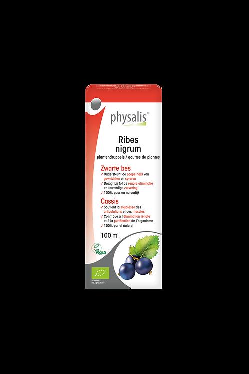 Physalis Ribes nigrum 100ml