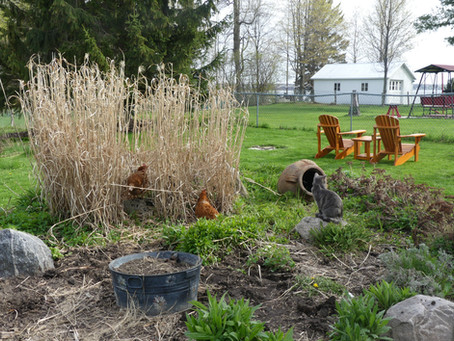 Un chat, 4 poules, et une aubergiste au jardin!