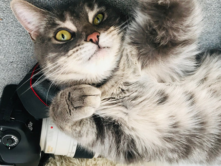 Voici le chat Frimö