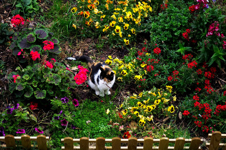 Bella in the garden